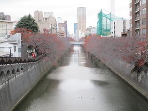 目黒川 (1).JPG