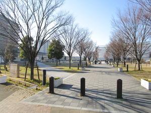 におどり公園芝生広場.JPG